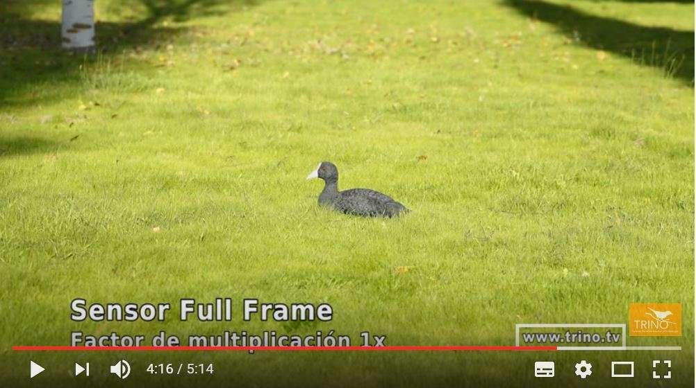fotografia-de-aves-camara-sensor-camara-sensor-apsc